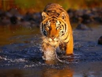 My Visit To Ranthambore Tiger Reserve